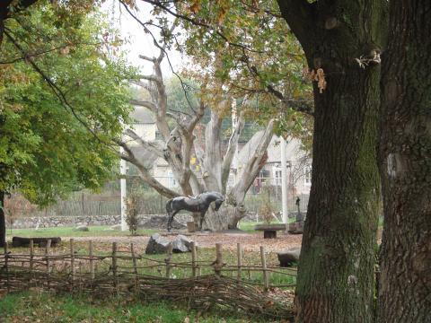 Запорозький дуб - Запоріжжя