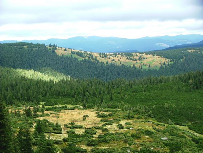 Карпатський національний природний парк
