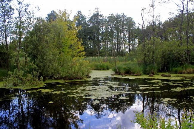 Шацькі озера - Волинська область